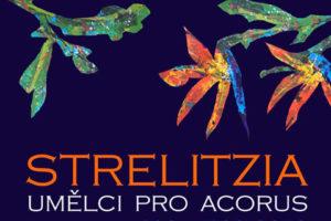 Strelitzia-Umělci pro Acorus