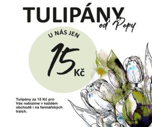 AKCE | TULIPÁN 15 Kč